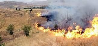 وقوع ۶۹ فقره آتش سوزی در عرصه های طبیعی کردستان