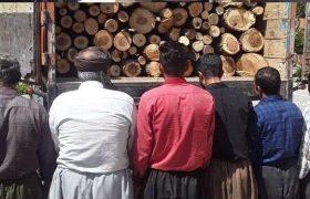 دستگیری عاملان قطع درختان جنگلی در بخش حسینآباد سنندج
