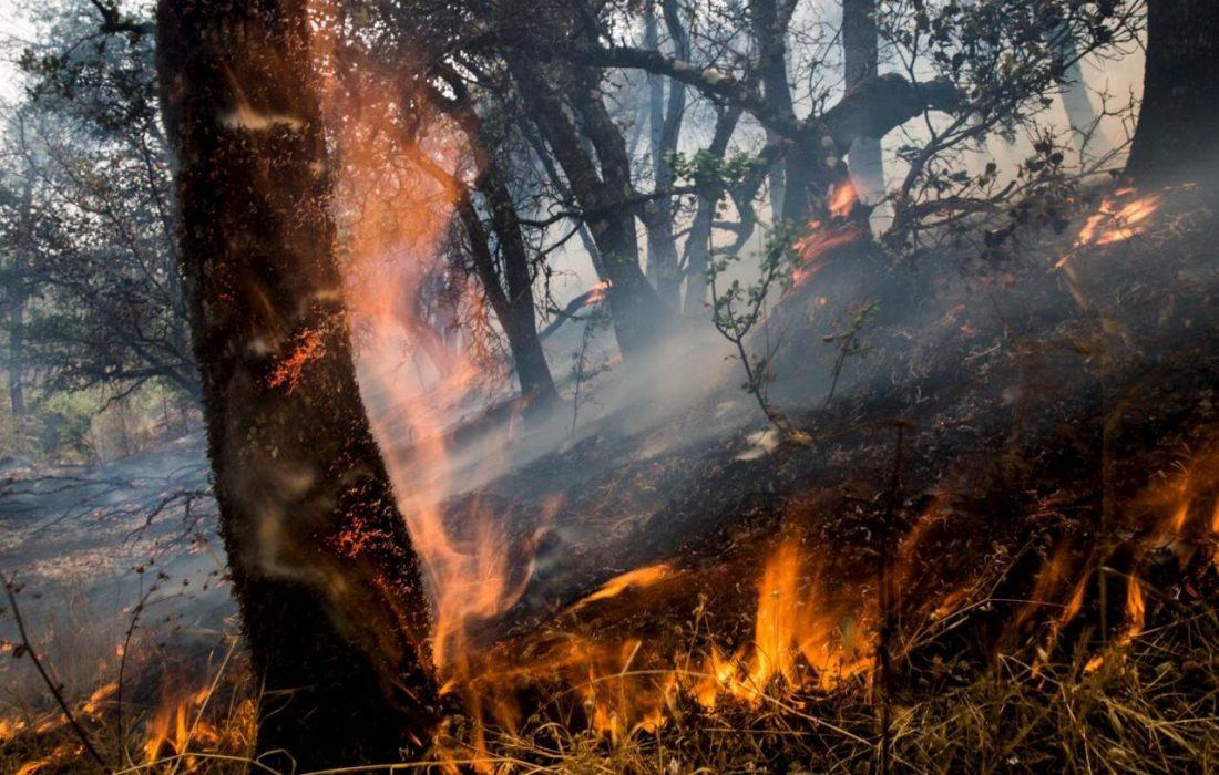 امسال بیش از ۲ هزار  هکتار از عرصههای طبیعی کردستان طعمه آتش شد