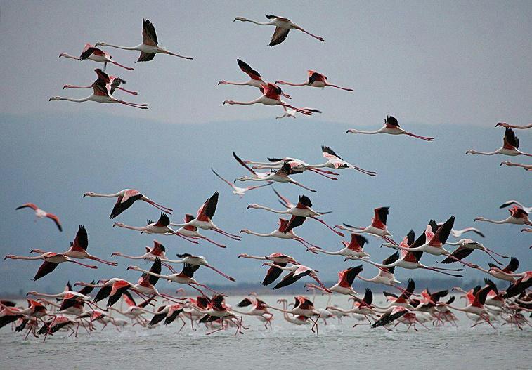 منابع آبی کردستان زیستگاهی مناسب برای پرندگان مهاجر